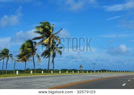 Car trip to Cuba. Palm trees along the road