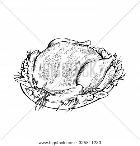 Cooked Chicken Hand Drawn Vector Illustration. Autumn Season Holiday, Thanksgiving Day, Festive Dinn
