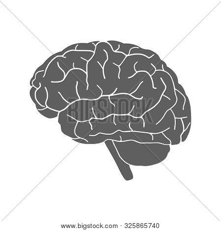 Brain Human Organ Icon. Human Brain Graphic Sign. Brain Gray Symbol Isolated On White Background. Ve