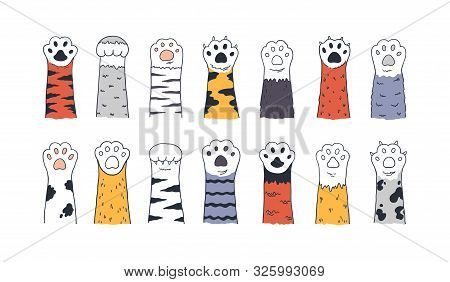 Cat Paws. Doodle Animal Foot, Cute Cartoon Kitten And Puppy Paws, Wild And Domestic Animals Foots. V