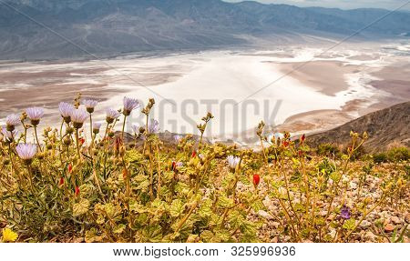 Salt Badwater Basin Panamint Mountains From Dantes View , Death Valley National Park