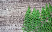 fern leaves on an old wood background with furrows. poster