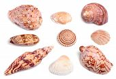 seashells on white background with light shadows poster