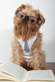 Serious dog in the glasses is on the books poster