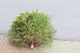 Traditional Green Christmas Tree Fir On Street Bottom After Xmas. The X-mas Tree Is Waiting For Garb