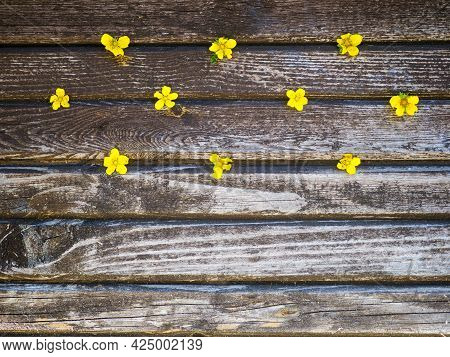 Yellow Buttercup Flowers On A Brown Wooden Background.