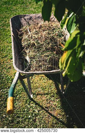 Blurred Metal Wheelbarrow With Cut Dry Grass And Tree Branches In The Garden. Cleaning And Garden Ma