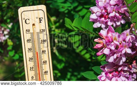 Favorable Temperature For Flowering Acacia. Close-up Of A Thermometer Against The Background Of Natu