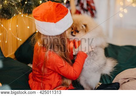 A Welcome Present For Christmas A Pomeranian Puppy. A Cute Little Girl Received A Puppy As A Gift Fo