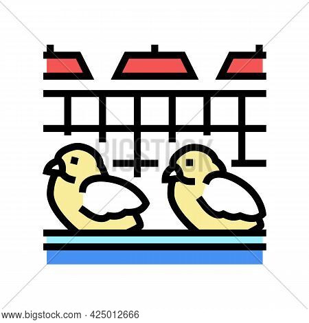 Chick In Poultry Farm Color Icon Vector. Chick In Poultry Farm Sign. Isolated Symbol Illustration
