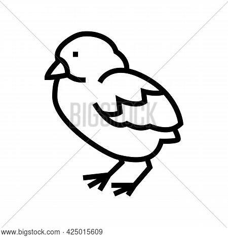 Chick Bird Line Icon Vector. Chick Bird Sign. Isolated Contour Symbol Black Illustration