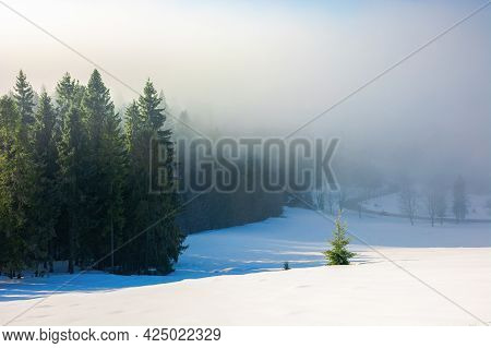 Spruce Trees In Morning Mist. Enchanting Winter Nature Scenery. Light Through Fog. Cold Weather Conc