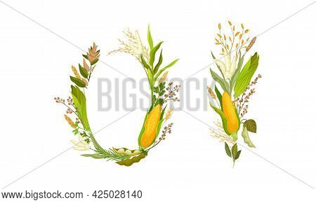 Agricultural Composition With Different Spikelet And Grain Crop Like Corn And Wheatear Vector Set