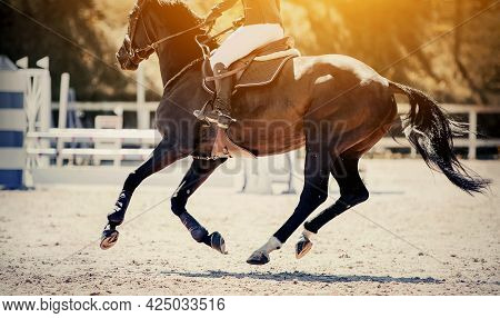 Equestrian Sport. Galloping Horse. Dressage Of Horses In The Arena. The Leg Of The Rider In The Stir