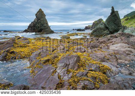 Yellow Moss Covered Rocks Along The Ocean Shoreline - Gros Morne, Newfoundland, Canada.