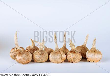 Crocus Bulbs Sativus On A White Background. Bulbs For Planting Saffron, For Getting The Saffron.