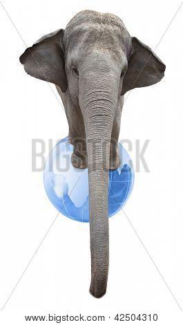 Circus elephant balancing on a big blue globe isolated on white background