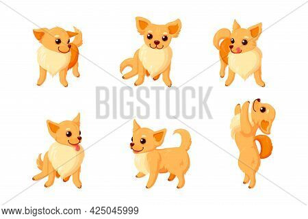 Playful Chihuahua Dogs. Sitting And Standing Chihuahua Companion Isolated In White Background. Vecto