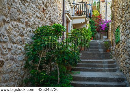 Stunning Narrow Old Street With Ornamental Green Plants. Rustic Medieval Narrow Street With Colorful