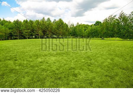 Landscape Of Lawn And Forest Background, Copy Space.