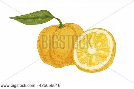 Composition Of Fresh Ripe Yuzu, Yellow Japanese Citrus Fruit. Asian Whole Citron And Its Cut Half. R