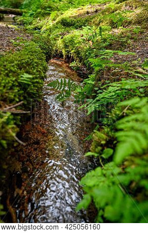 Small Stream Of Water Through Green Forest