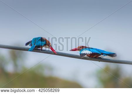A Closeup Shot Of Two Red-beaked Birds Sitting On A Rope