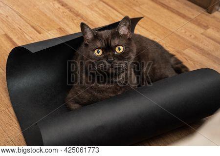 Black Cat Laying On The Floor In Unwound Roll Of Dark Paper