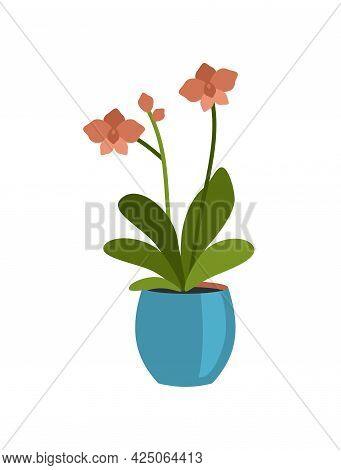 Blooming Houseplant In Pot. Red Petals With Oval Green Leaves. Stylish Interior Blue Flowerpot. Brig