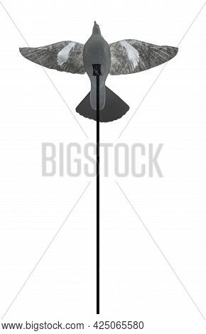 Pigeon Decoy With Open Wings Over Pole. Pigeons Hunting Equipment. Isolated Over White