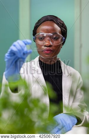 Closeup Of African Scientist Woman Looking At Test Sample Of Leaf Analyzing For Biological Experimen