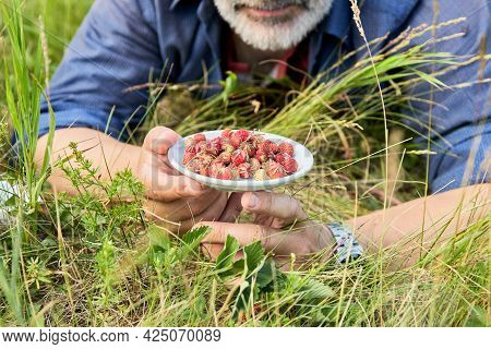 An Adult Man Is Lying On His Stomach In The Grass. He Holds A Saucer With A Harvested Wild Berry In