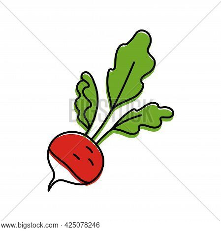 Radish. Vegetable Sketch. Color Simple Icon. Hand Drawn Vector Doodle Illustration