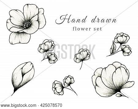 Hand Drawn Vintage Set Of Flowers Isolated On White, Botanic Illustration Of Monochrome Floral Colle