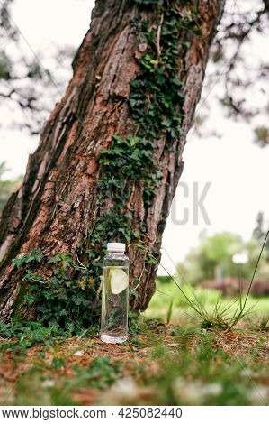 Bottle Of Water With Lemon Is At The Trunk Of A Spruce, Entwined With Ivy