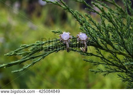 Wedding Gold Rings Close-up On A Background Of Green Home Flowers, Bushes.