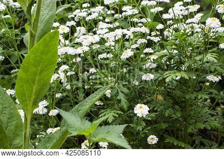 A Close Up Of A Flower Garden.a Close Up Of A Plant