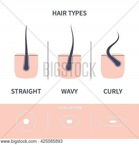 Hair Growth Types Chart Set Of Straigt, Wavy And Curly Strands