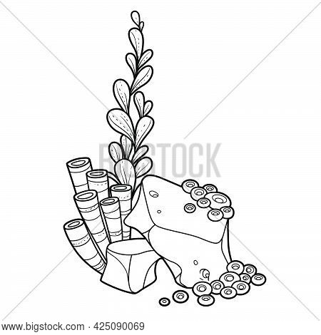 Big Sponge And Algae On Sandstone Coloring Book Linear Drawing Isolated On White Background