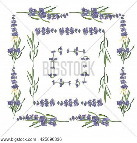 Set Violet Lavender Beautiful Floral Frames Template In Vector Watercolor Style Isolated On White Ba