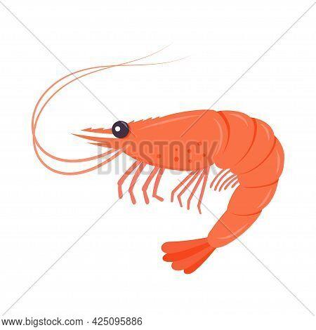 Boiled Shrimp Or Tiger Prawns Isolated On White Background. Vector Illustration.