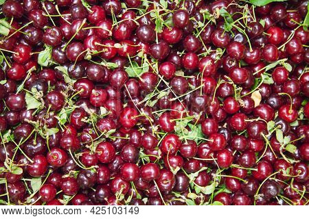 Cherry Berries Are Burgundy In Color With Cuttings And Leaves. Fruits Nuts Vegetables Berries Useful