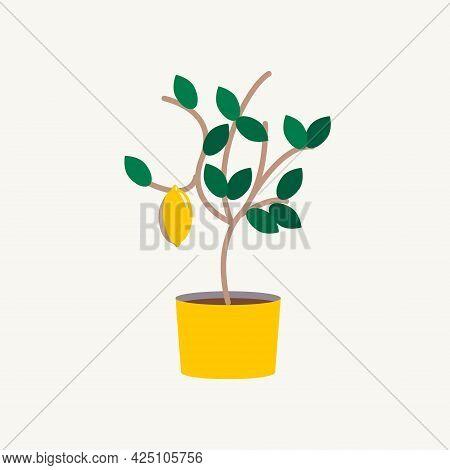 Lemon On A Lemon Tree. Lemon Tree In A Pot In The Home Garden