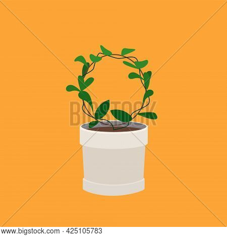 Plant Grows On A Round Stand In A Pot. Ivy Grows In A Circle In A Pot. Green Home Plant In A Light P