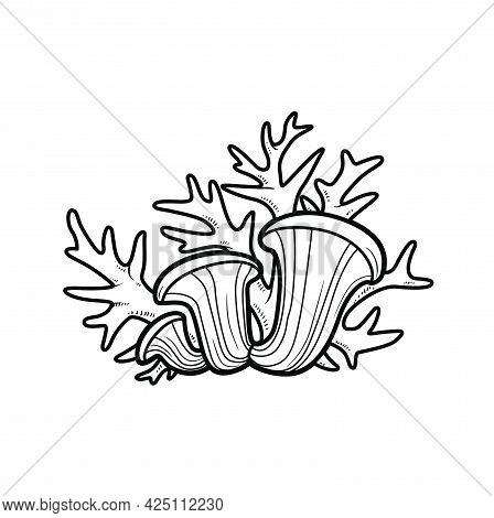 Sponges And Corals Object Coloring Book Linear Drawing Isolated On White Background