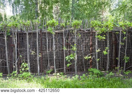 Woven Wooden Fence A Wooden Fence, Woven From Birch Branches, In A Lush Green Forest. Shallow Depth