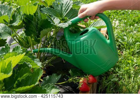 Organic Garden With Irrigation And Small Plants In Garden