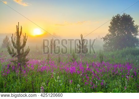 Beautiful Spring Landscape With Blooming Flowers In Meadow, Fog And Sunrise