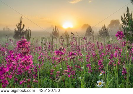 Beautiful Spring Landscape With Blooming Flowers On Meadow, Fog And Sunrise