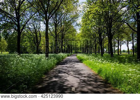 A Landscape Portrait Of A Bicycle Road In The Middle Of A Forest On A Sunny Day. The Road Has Trees